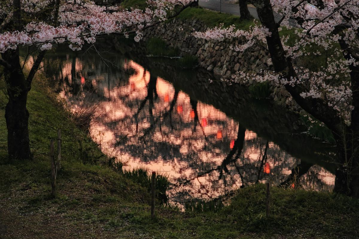 桜 2014 丹波 LAST              _f0021869_2328365.jpg