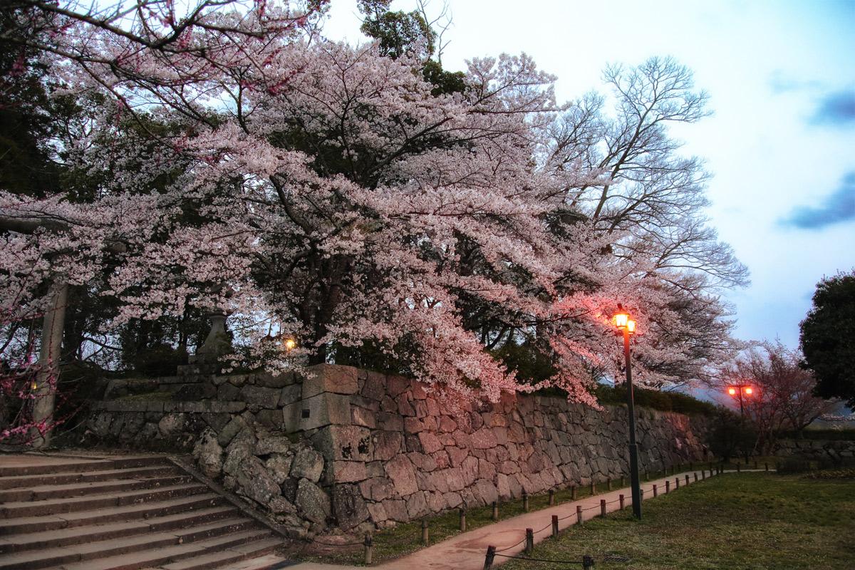 桜 2014 丹波 LAST              _f0021869_23293767.jpg