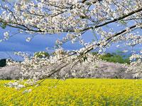 聖心館葉山道場空手通信 【 2014年 5月号】_e0198590_15341449.jpg