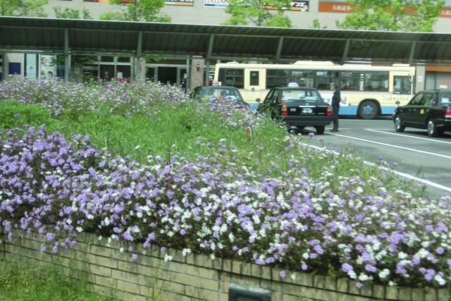 阪急電車「西宮北口」は花々がいっぱい、宝塚歌劇100周年ラッピング電車で春爛漫、阪急沿線は楽しい_d0181492_20315540.jpg