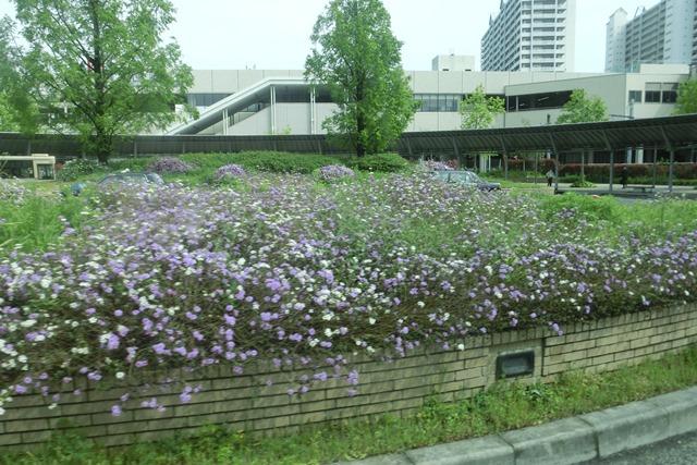 阪急電車「西宮北口」は花々がいっぱい、宝塚歌劇100周年ラッピング電車で春爛漫、阪急沿線は楽しい_d0181492_203285.jpg