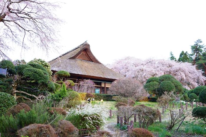 秩父宮記念公園 夜桜ライトアップ_b0145398_21423494.jpg