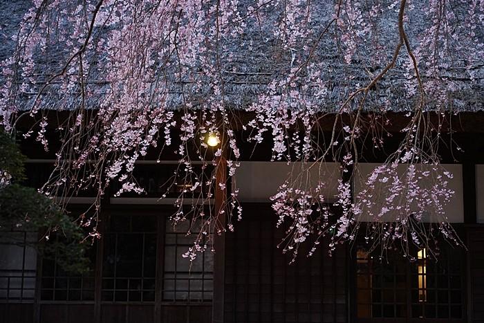秩父宮記念公園 夜桜ライトアップ_b0145398_22425096.jpg