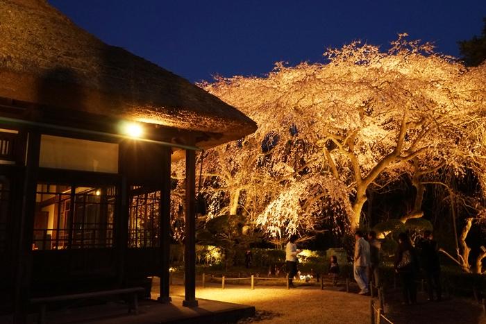 秩父宮記念公園 夜桜ライトアップ_b0145398_22485721.jpg
