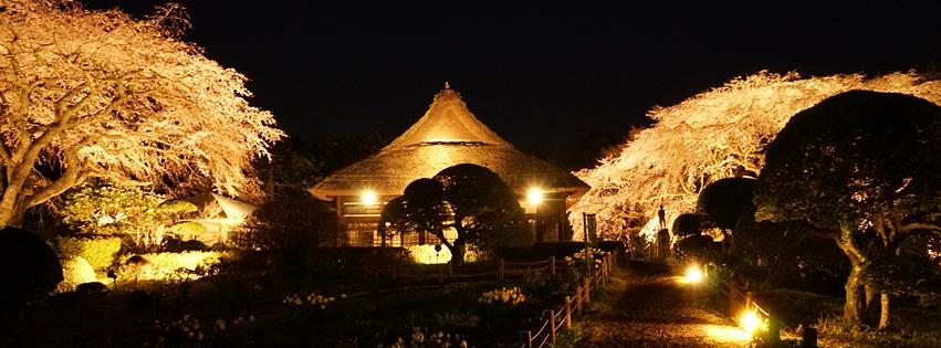 秩父宮記念公園 夜桜ライトアップ_b0145398_22495411.jpg