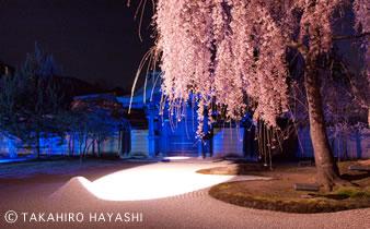 高台寺 in kyoto_f0191715_15115035.jpg