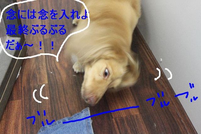 b0130018_172250.jpg
