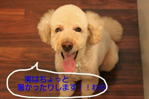 b0130018_22105110.jpg
