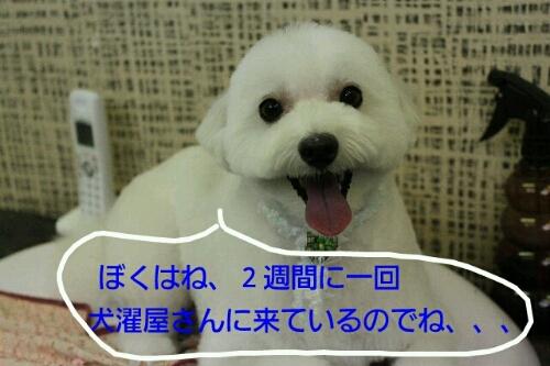 b0130018_2281787.jpg