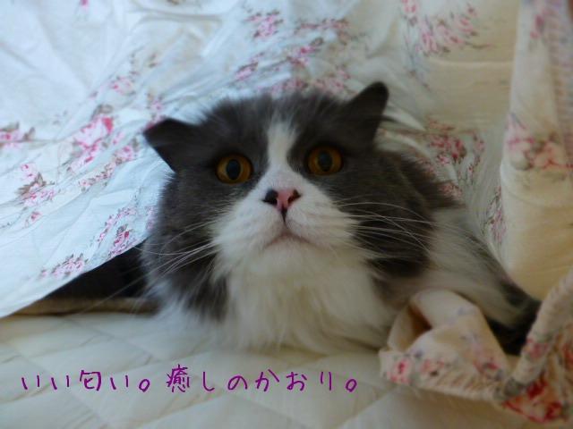 シーツ掛けの邪魔モノ_e0237625_17373218.jpg