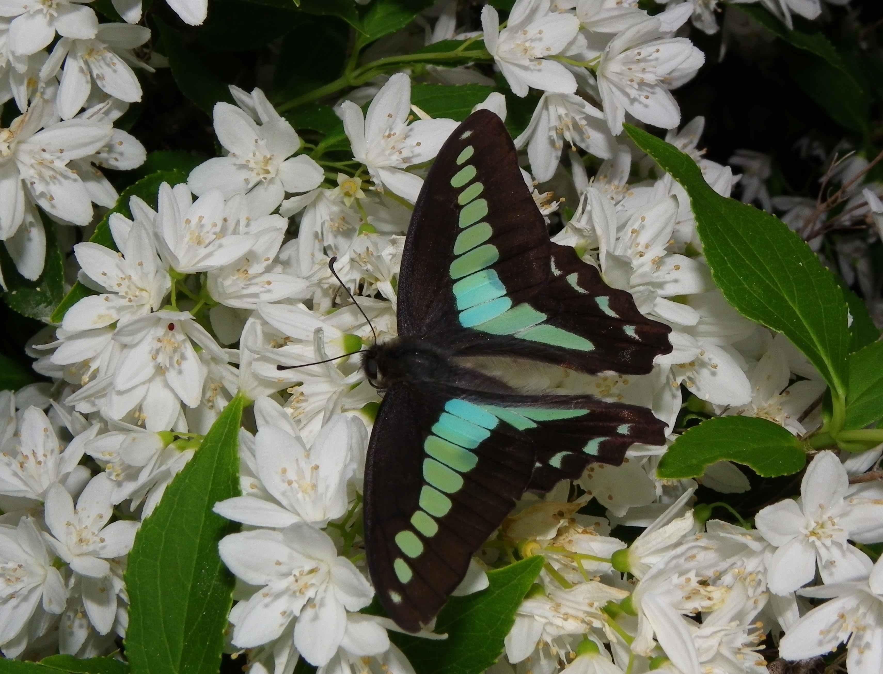 ミドリシジミの幼虫他_d0254540_19334554.jpg