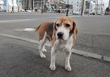 ごんちゃん_a0070350_2047314.jpg