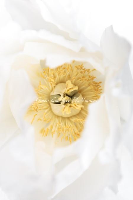花のある風景 白花のシベ_b0133053_0104028.jpg