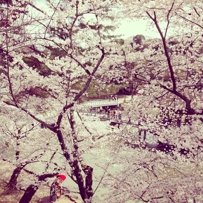 お花見弁当と、桜のどら焼き_f0311281_14302026.jpg
