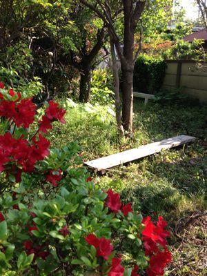 新緑の季節_f0087202_10394422.jpg