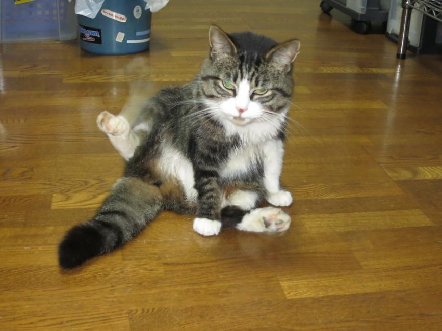【猫】お風呂の後に_f0141609_2341949.jpg