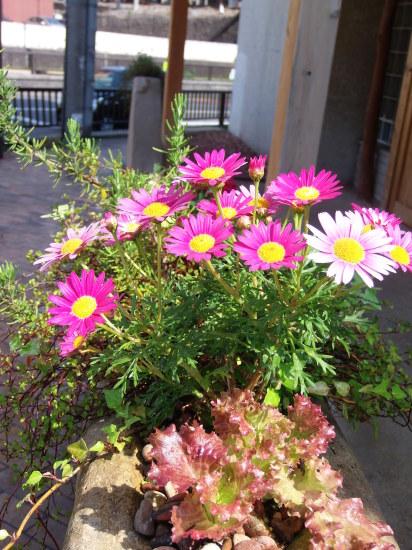 お店の「花壇」では。_a0125419_21202702.jpg
