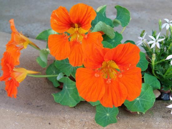 お店の「花壇」では。_a0125419_21210857.jpg