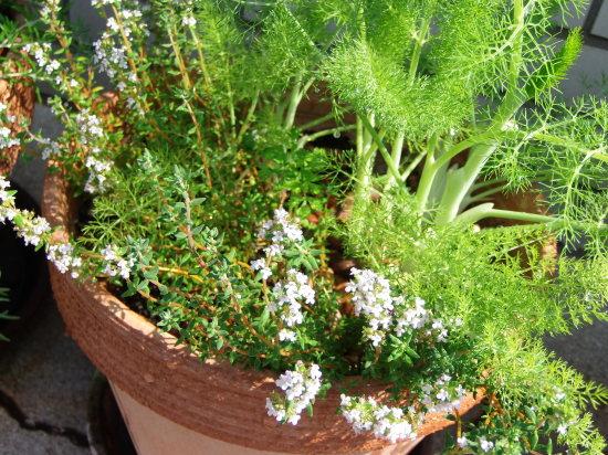 お店の「花壇」では。_a0125419_21244236.jpg