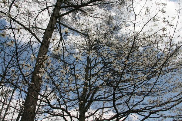 GW春の陽気を感じて_b0174425_14542222.jpg