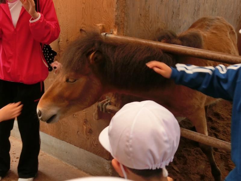 馬小屋の見学♪_e0061225_1710991.jpg