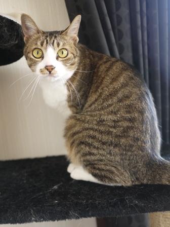 猫のお友だち じょあんちゃんはんくすちゃんあーるくんもんてぃーくん編。_a0143140_23242436.jpg