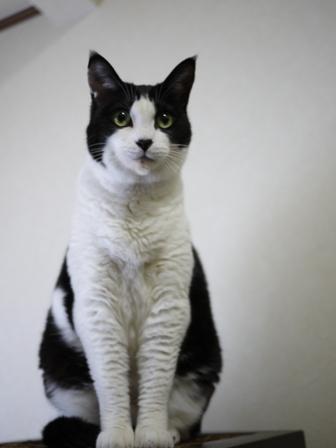 猫のお友だち じょあんちゃんはんくすちゃんあーるくんもんてぃーくん編。_a0143140_23245814.jpg