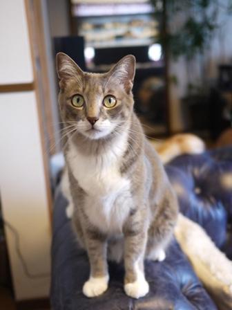 猫のお友だち じょあんちゃんはんくすちゃんあーるくんもんてぃーくん編。_a0143140_23251845.jpg