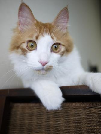 猫のお友だち じょあんちゃんはんくすちゃんあーるくんもんてぃーくん編。_a0143140_23254352.jpg