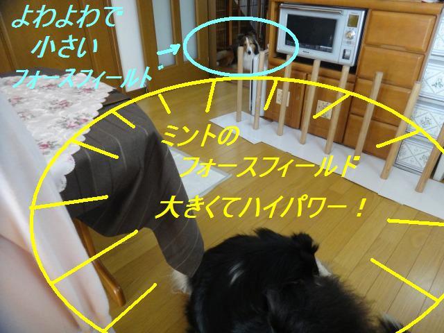 e0195743_15124450.jpg