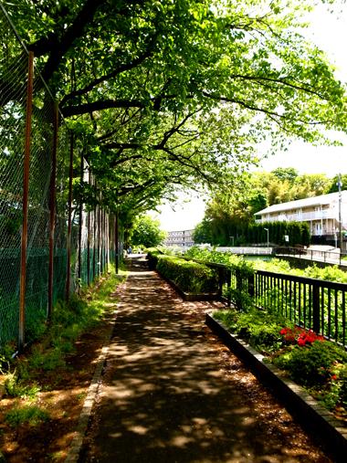 晩春、遊歩道は未来へ続く_e0071652_1237723.jpg