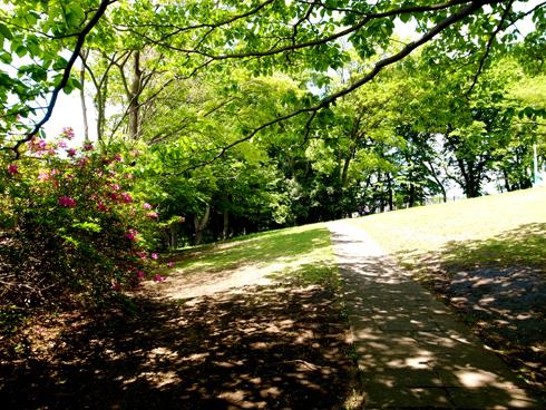 晩春、遊歩道は未来へ続く_e0071652_12534695.jpg