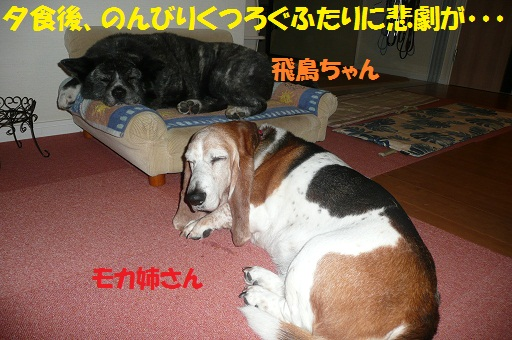 f0121712_6262937.jpg
