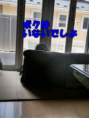f0326925_23020416.jpg