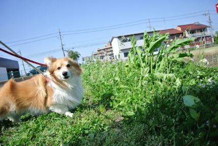 5/2 お散歩_e0236430_22493910.jpg