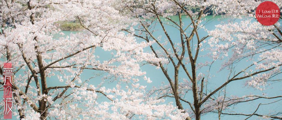 湖と桜(立山町白岩ダム)_b0157849_00140203.jpg