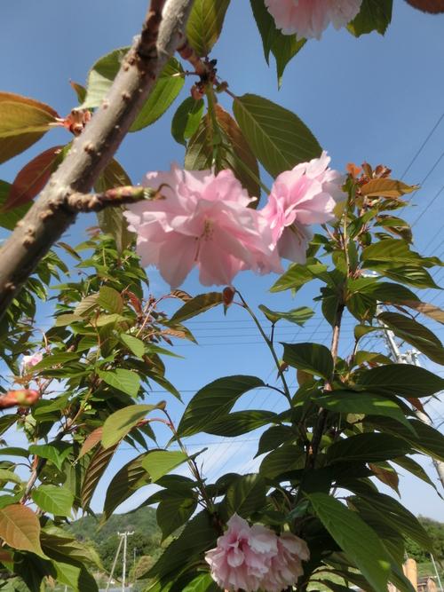庭に咲いた色とりどりの花_e0291149_2174766.jpg