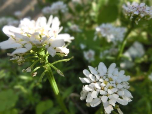 庭に咲いた色とりどりの花_e0291149_2182677.jpg