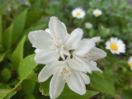 庭に咲いた色とりどりの花_e0291149_2185923.jpg
