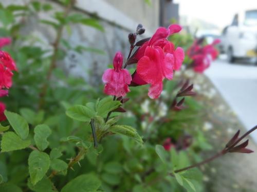 庭に咲いた色とりどりの花_e0291149_2191142.jpg
