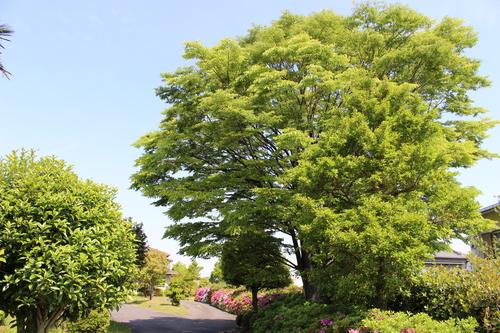 緑と花と奥飛騨_f0198201_10493581.jpg