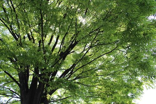 緑と花と奥飛騨_f0198201_1049378.jpg