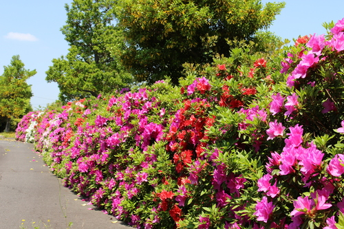 緑と花と奥飛騨_f0198201_10501495.jpg