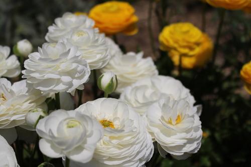 緑と花と奥飛騨_f0198201_1050331.jpg