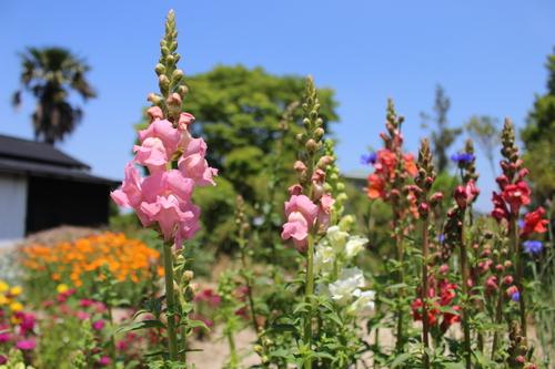 緑と花と奥飛騨_f0198201_10505493.jpg