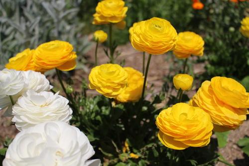 緑と花と奥飛騨_f0198201_10511528.jpg