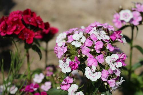 緑と花と奥飛騨_f0198201_10513376.jpg