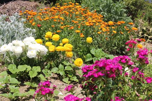 緑と花と奥飛騨_f0198201_10521498.jpg