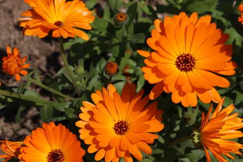 緑と花と奥飛騨_f0198201_10523226.jpg