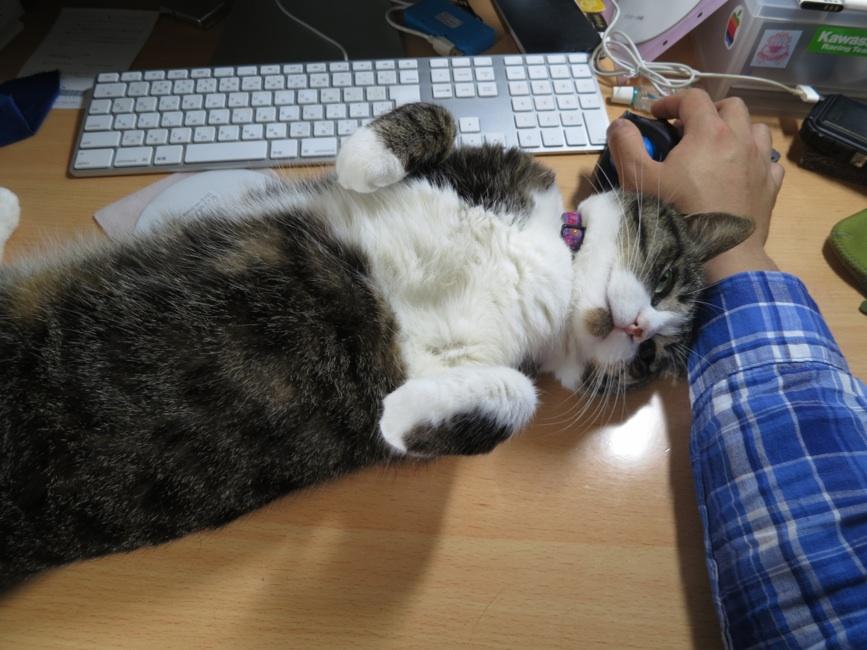 【猫】甘えてくるのに。。_f0141609_23554171.jpg